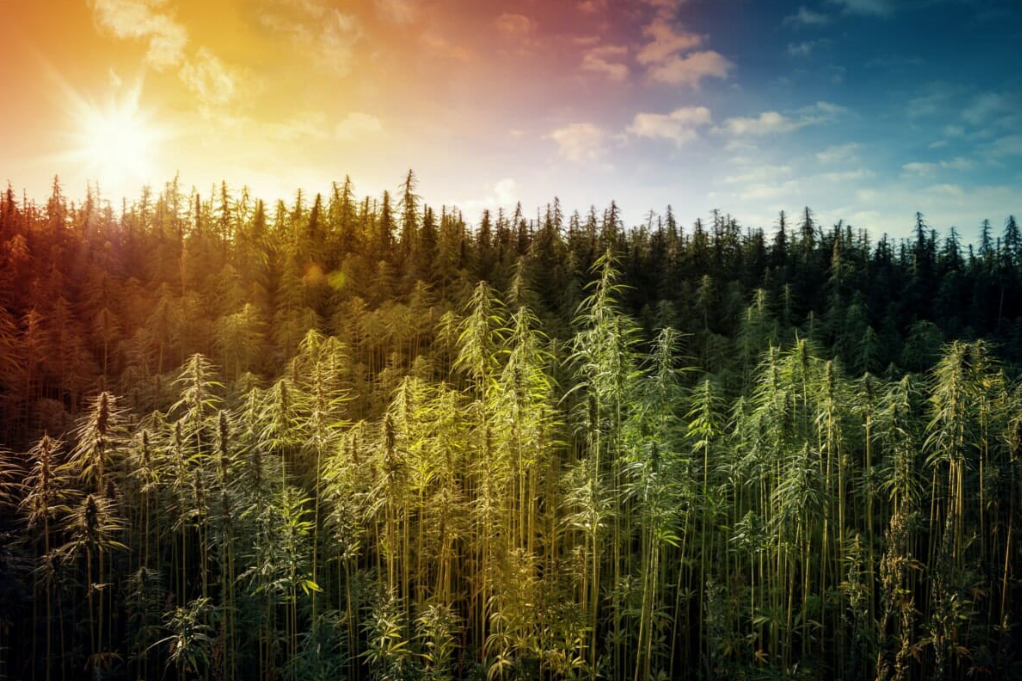 4 Remarkable Ways Hemp Can Save The Planet