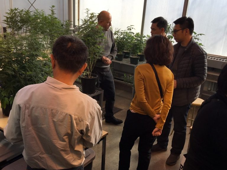 Dr. Kovalchuk describes lab activities with hemp plants.