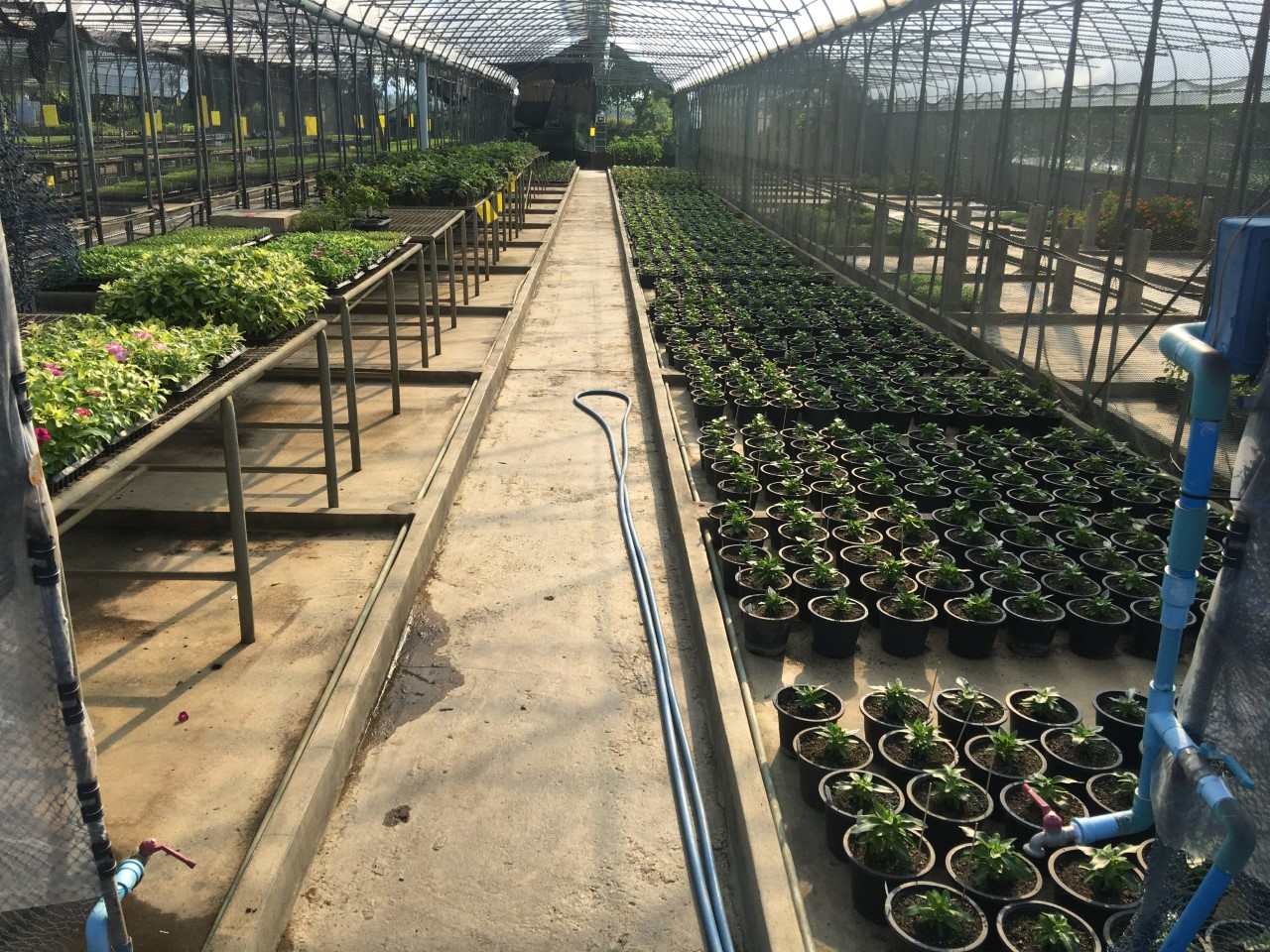 Seedling operations, Thailand.