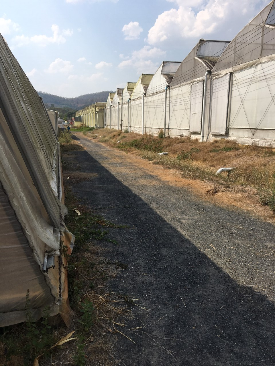 Potential growing facility in Thailand.